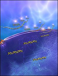 Biocomputer